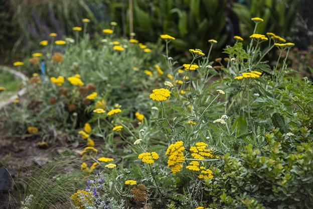 12 flores amarillas