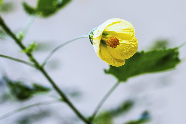 w.flor